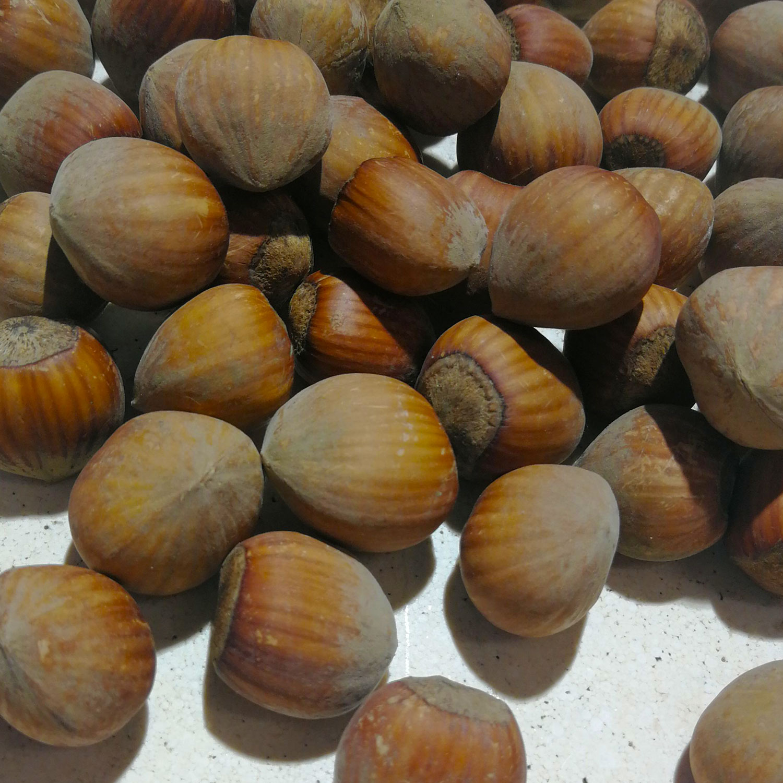 nocciola-bianca-avellino-azienda-agricola-demaio01